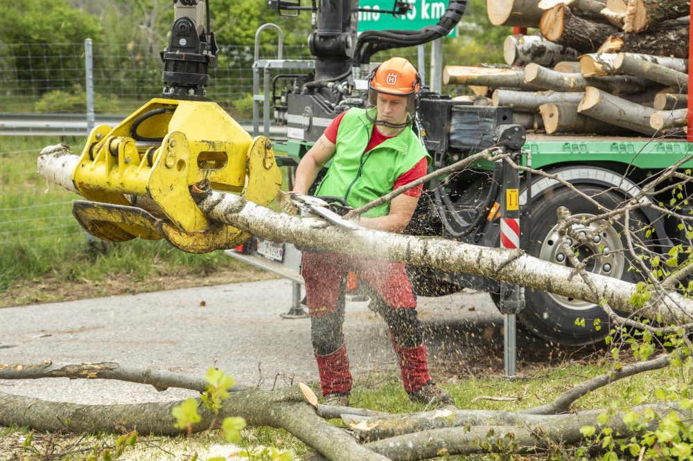 Bäume verarbeiten und transportieren