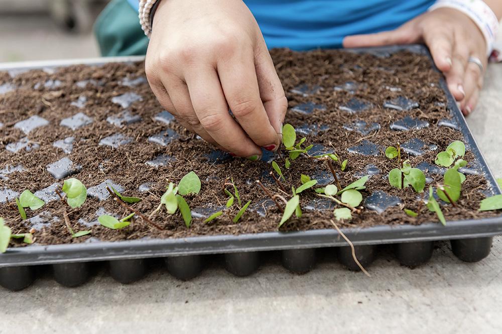 Aussaat und Pflanzung