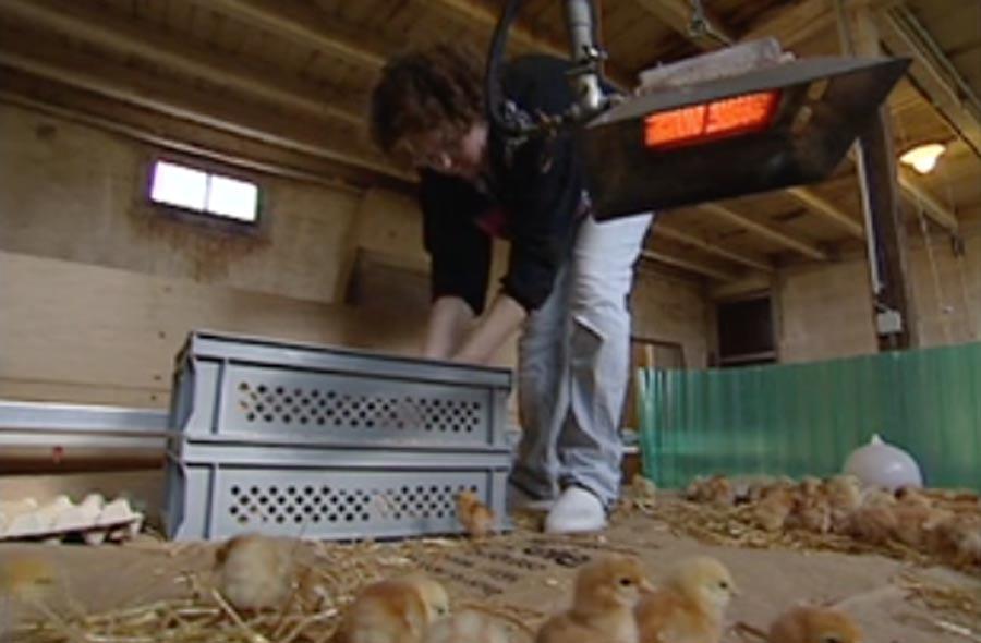 Arbeiten mit Tieren - Reportfilm