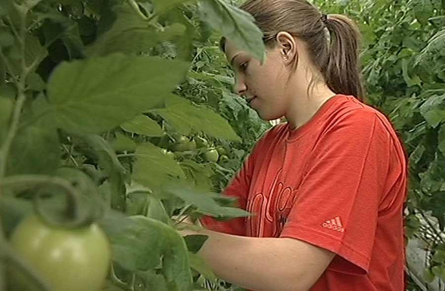 Gemüsegärtner/in EFZ – Film mit Porträt einer Lernenden