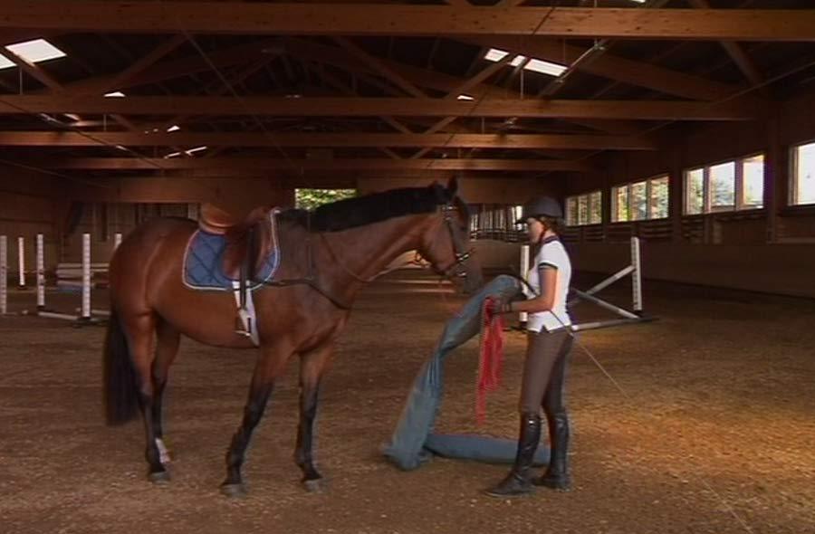 Pferdefachmann/-frau EFZ (Klassisches Reiten) – Film mit Porträt einer Lernenden