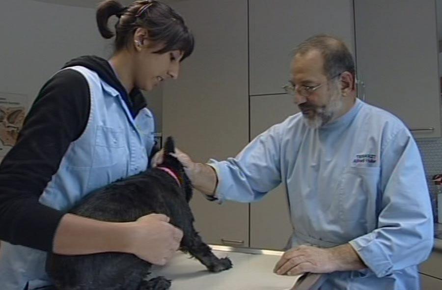 Tiermedizinische/r Praxisassistent/in EFZ – Film mit Porträt einer Lernenden