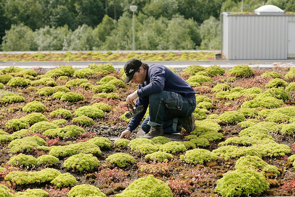 Terrassenbeläge und Grünflächen einbauen