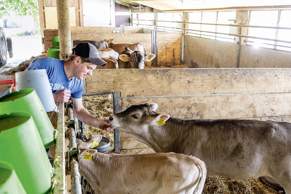 Tiere füttern und pflegen