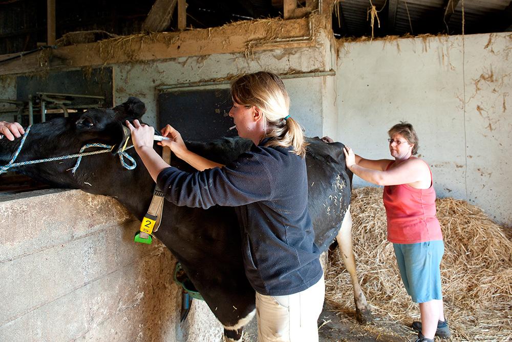 Visites aux éleveurs