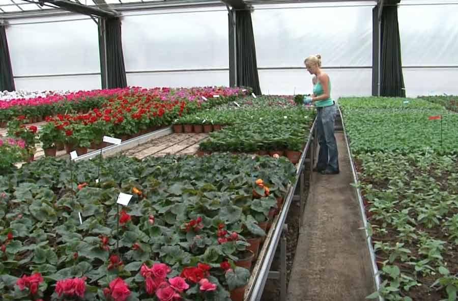 Horticulteur/trice CFC: orientations floriculture et paysagisme