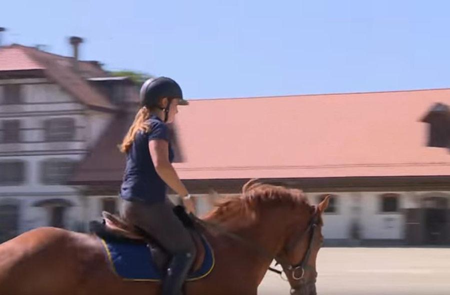 Professionnel/le du cheval CFC - Soins aux chevaux et monte classique