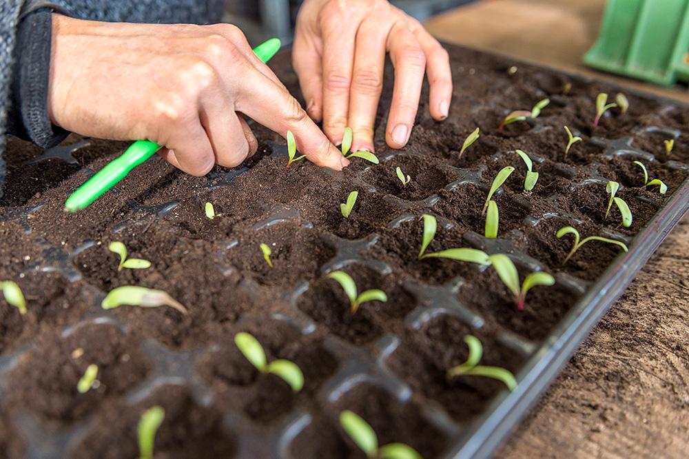 Faire pousser des plants