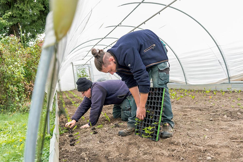 Planter en plein air ou sous serre