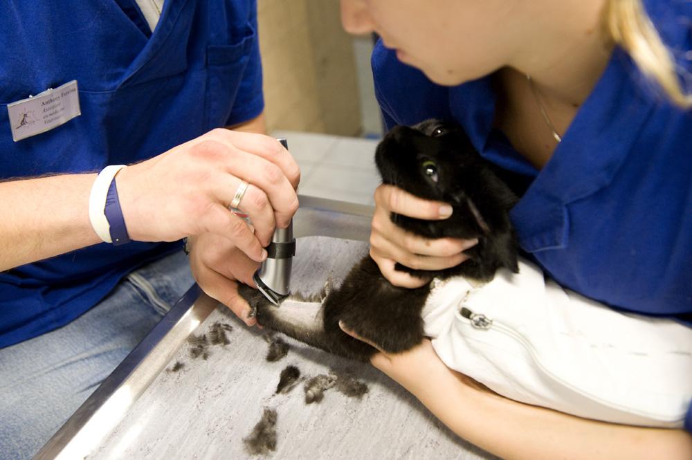 Préparer l'animal