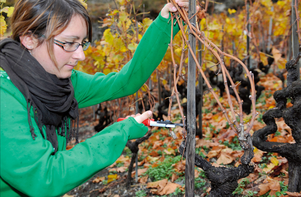Entretenir la vigne