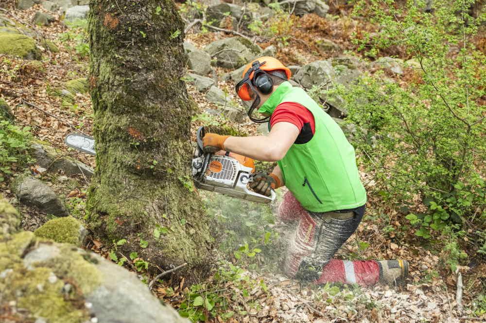 Abbattere gli alberi