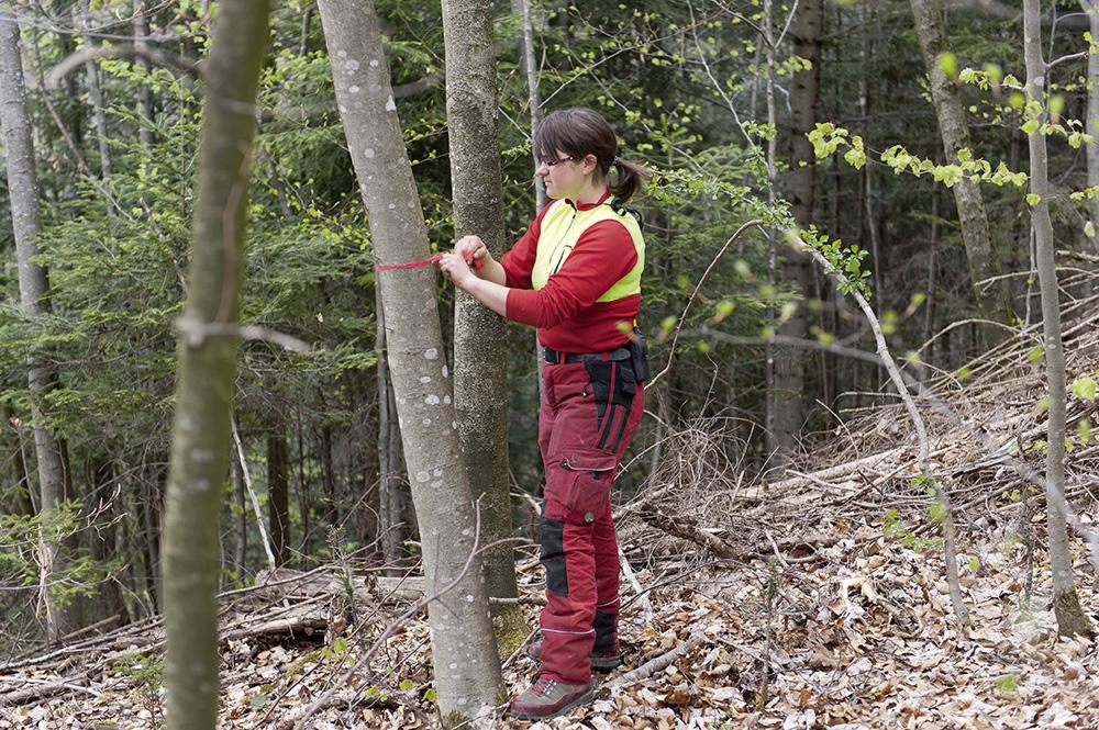 Cura del bosco giovane