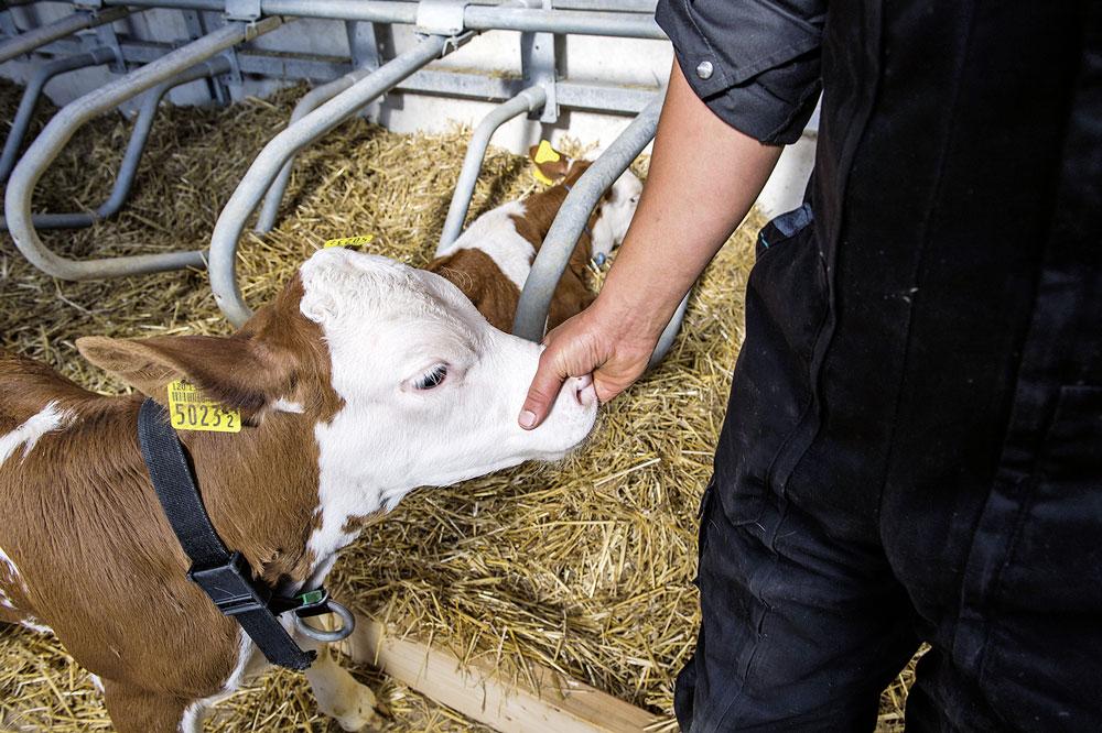 Assicurare il benessere degli animali